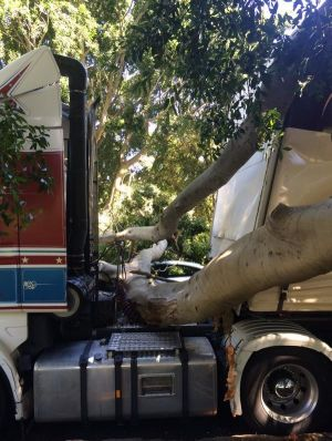The tree branch which hit the truck.