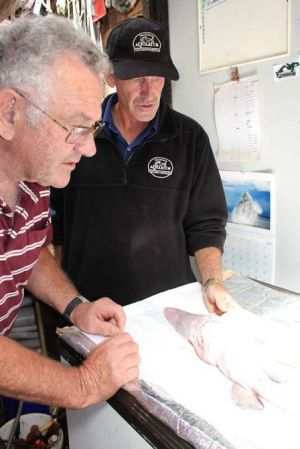 The Sapphire Coast Marine Discovery Centre's Alan Scrymgeour, left, and the Wharf Aquarium's Michael McMaster examine ...
