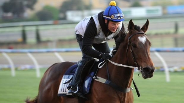 Lankan Rupee finished 2014 as the equal highest-rated sprinter in the world alongside Terravista.