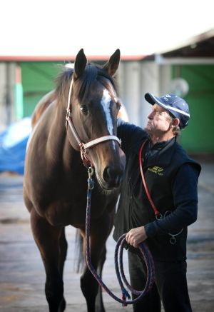 Champion sprinter Hay List at the stables with trainer John McNair in Brisbane in 2011