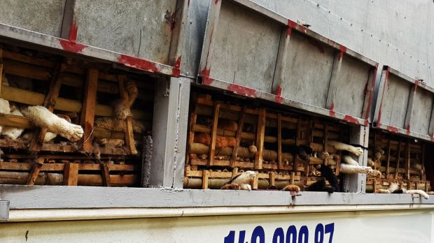 Cages containing live cats that were seized by Vietnamese authorities.
