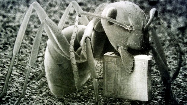 Nanotechnology: An ant carries a one millimetre square microchip in it's mandibles.