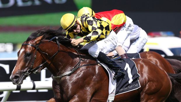 Big winner: Scissor Kick was named NSW Country Horse of the Year on Friday.