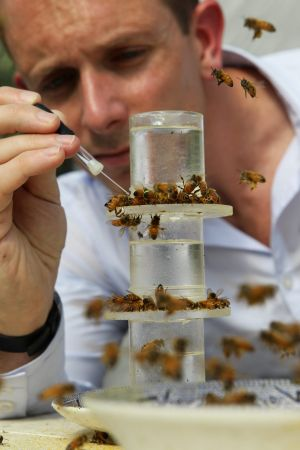 Andrew Barron: 'lots of bees to no bees in a few weeks'. Photo: Wolter Peeters