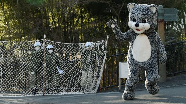 On the run: A zoo employee dressed in a snow leopard costume takes part in the drill.