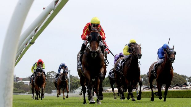 Ready for more: Ninth Legion will take on a class field at Randwick on Saturday.