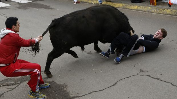 Down: Benjamin Miller on the ground as a futile attempt is made to pull the bull away.