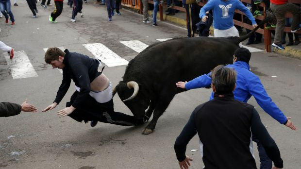No escape: Benjamin Miller is caught by the bull.