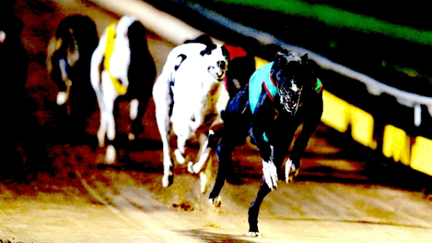 There have been live baiting cruelty allegations in greyhound industry.