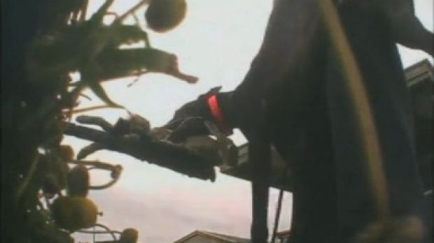 A still from the ABC <i>Four Corners</i> program exposing live baiting practices in the greyhound racing industry.