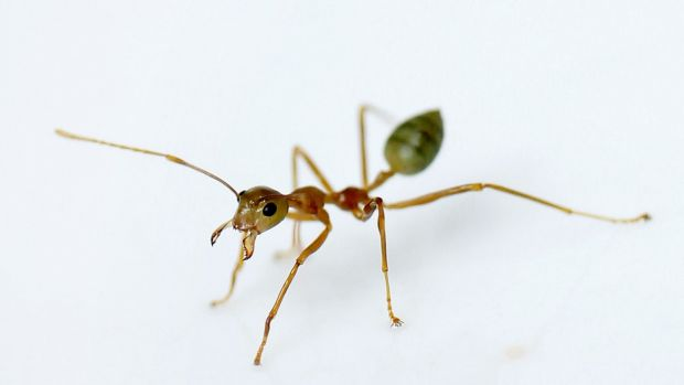 Ants, like humans, use indoor toilets.