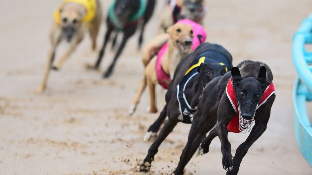 Five Queensland greyhound trainers have been banned for life in the wake of the live baiting scandal.