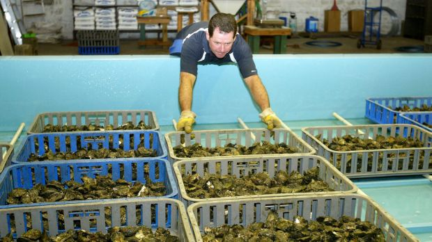 Pacific Oyster Climate Change Natural Resources Defense