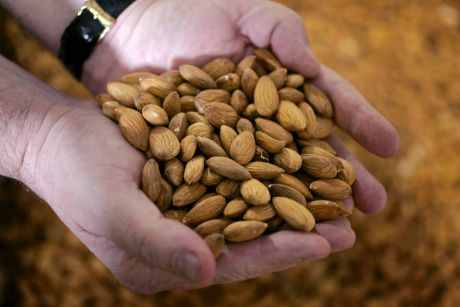A handfull of product from Select Harvests' almond plantation