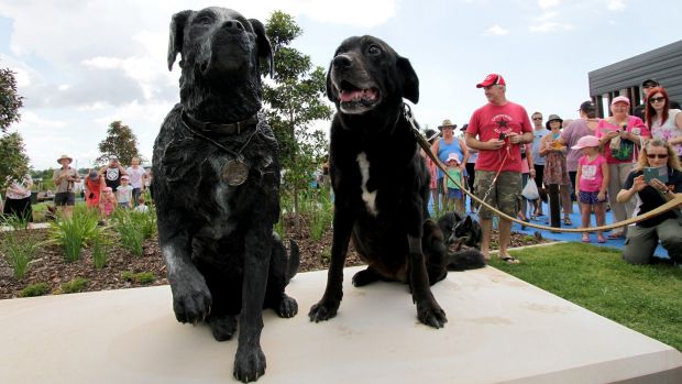 Sarbi and a statue of herself at a dog park in Warner on February 28.