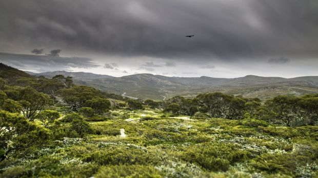A crow ushers in storm clouds over Charlotte Pass, Kosciuszko National Park.