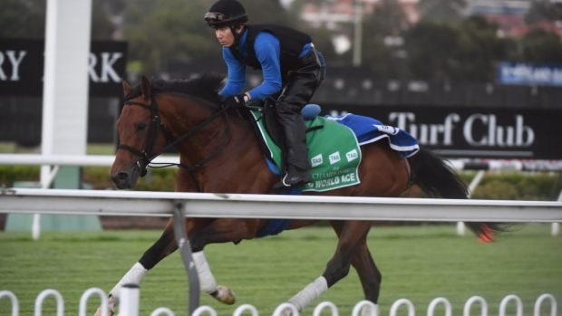Star power: Japanese ace World Ace works at Canterbury racecourse on Tuesday.