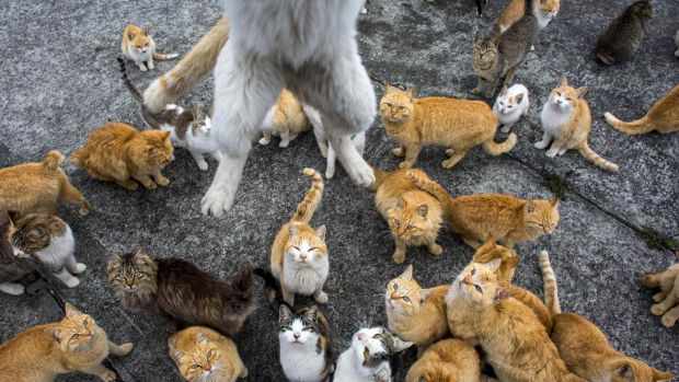 The world's their cat cafe: A cat leaps at the photographer to snatch his lunch.
