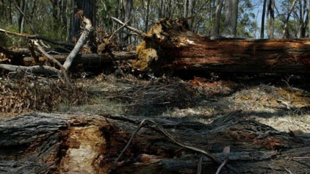 The Labor government promised to tighten Vegetation Management Act guidelines when it won the 2015 state election and ...