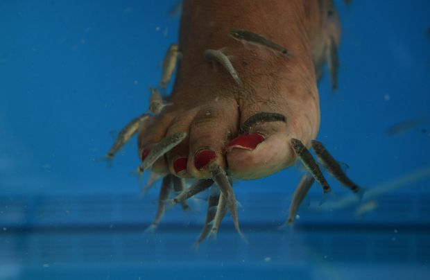 Picture editor 39 s choice 11th march 2015 for Fish pedicure nyc