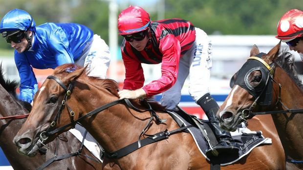 All the talk: Gai Waterhouse filly Speak Fondly shapes as a strong chance in the Golden Rose.
