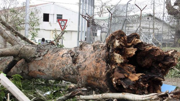 A large tree uprooted by Cyclone Pam near a prison in Port Vila