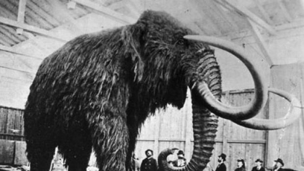 A stuffed woolly mammoth.