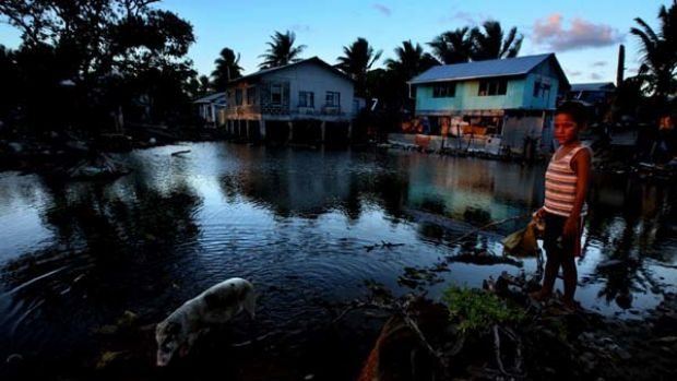 Vulnerable ... a boy and a piglet that had escaped on the Tuvaluan island of Funafuti, where residents say rising sea ...