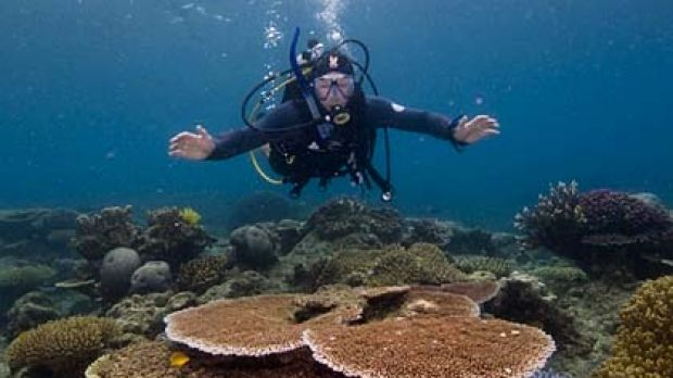 Great Barrier Reef ... 14 million tonnes of sediment washes into its waters each year.