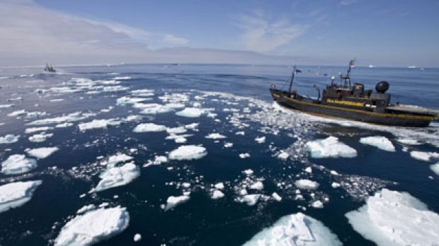 Hunted ... the anti-whaling vessel Steve Irwin pursues the Japanese whaling fleet earlier this month.