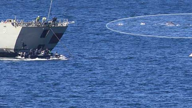The pod of dolphins passes HMAS Adelaide off Avoca before the scuttling operation today.
