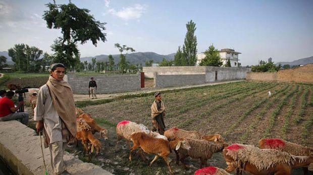 Boys herd sheep past the compound where Osama bin Laden lived.