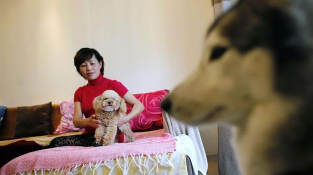New rules... a Shanghai resident, Guo Huiying, with her two dogs, Xixi, left, and Snow, in her apartment.