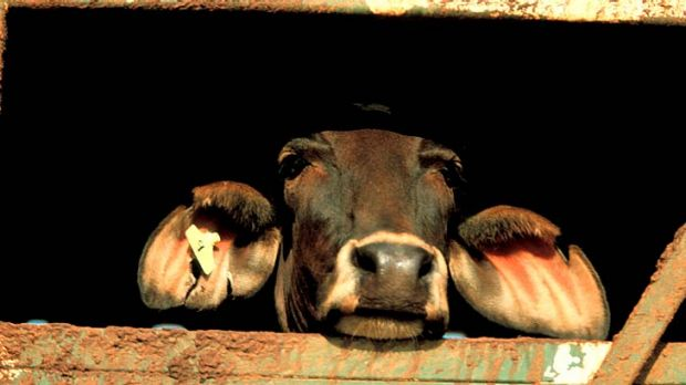 Indonesian abattoirs will not slaughter Australian cattle after being suspended indefinitely.