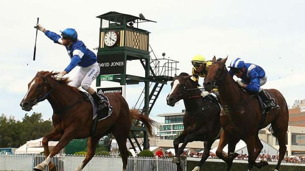 Star performer: Star Witness, pictured winning the Blue Diamond Stakes last year, is in good form as he prepares to race ...