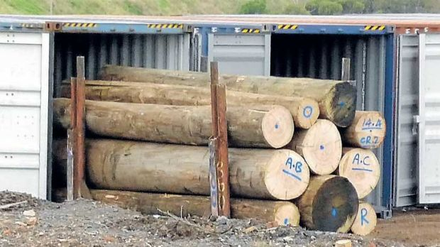 Harvested from Victoria's bushfire-damaged native forests, these valuable logs have been stored in a Brooklyn timber yard.