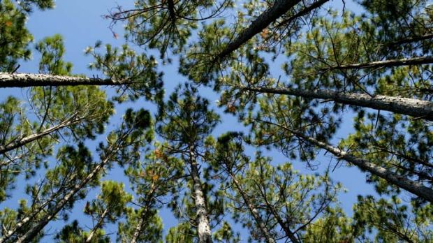A study has found that afforestation is not a response to temperature control.
