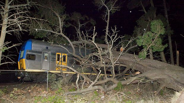 A tree causes damage to a train at Medlow Bath, in the Blue Mountains, last night.