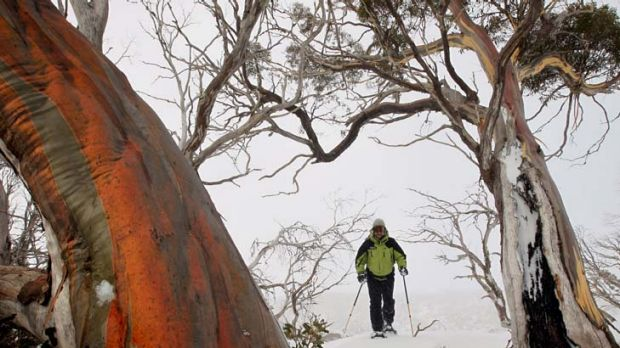 Bruce Easton enjoys the solace of Perisher while most of us worry about the effects of the carbon tax.