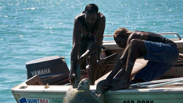 Birthright ... a turtle is dragged on board a boat in a practice that is reserved exclusively for indigenous people.