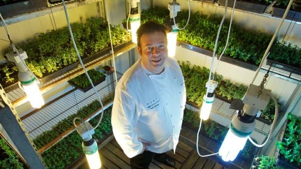 Solution ... chef Peter Gilmore in his growing room.