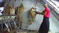Animals strung up to die (Video Thumbnail)