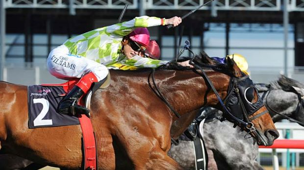 Welcome back: Craig Williams urges Littorio (left) to a shock first-up win yesterday.