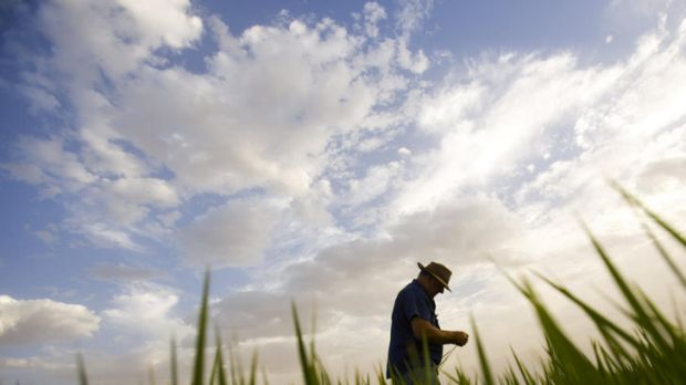 More than 1200 skilled jobs were lost from Australia's rice industry during the recent drought.
