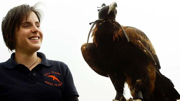 September 2009: Erin Werner of Full Flight Birds of Prey with Zorro, a wedge-tailed eagle that was going to be used to ...