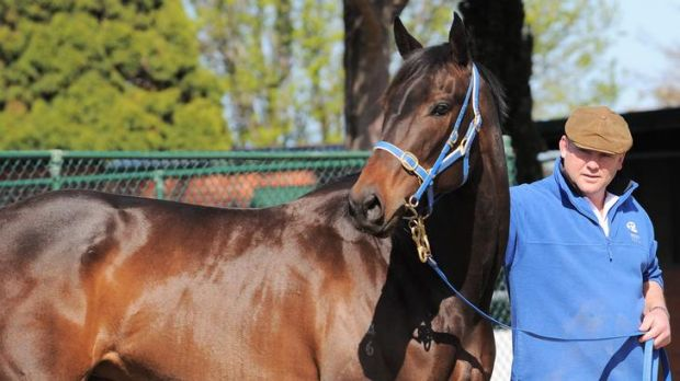 Champion pair: Peter Moody with Black Caviar.