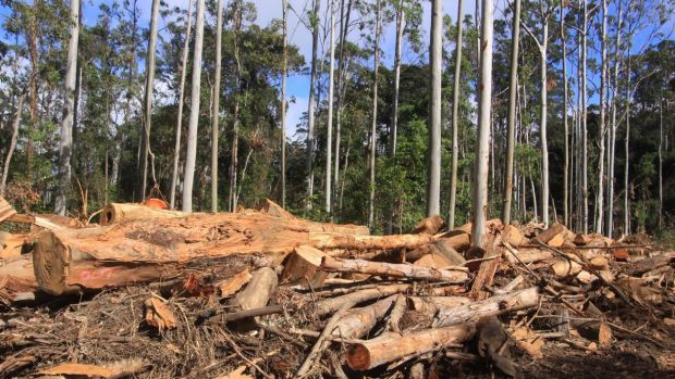 Logging in state forests may be back in the spotlight.