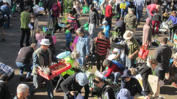 Canberra gardeners descend (like locusts) on the ANPS plant sale.