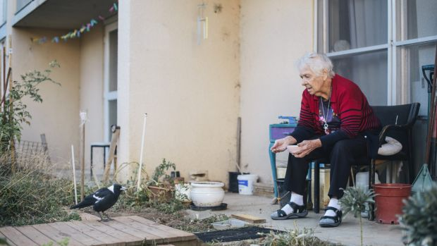 Owen Flats resident, Laurel Dakin, feeds the magpies outside her public housing flat  which is expected to be bulldozed ...