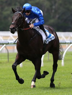 Exosphere, one of the 'famous five' lining up for the Black Caviar Lightning Stakes at Flemington on Saturday.